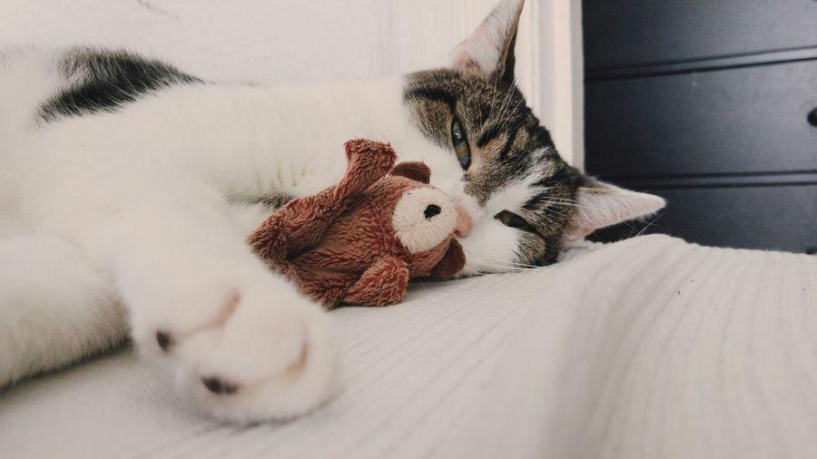 World Cat Day Weltkatzentag Cat Lovers Catoftheday Cat Catcontent Cats Of EyeEm Schlumpelkater
