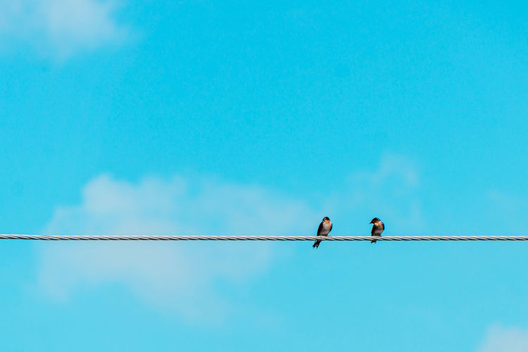 Low angle view of birds perching on cable against blue sky during sunny day