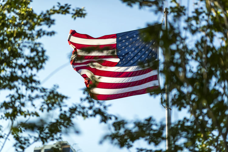 USA flag America Day Environment Flag Flags Focus On Foreground Independence Low Angle View Nature No People Outdoors Patriotism Plant Red Shape Sky Star Shape Striped Tree Wind
