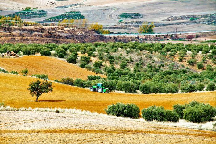 Idyllic Scenics EyeEm Hello World Hi!! No People El Tiempo Detenido EyeEm Gallery Green Color Golden Nature Rural