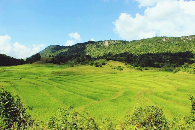 Landscape Rural Scene Terraced Field Rice - Cereal Plant Rice Paddy Scenics No People Nature Agriculture Green Color Travel Destinations Ricefield Ricefield View