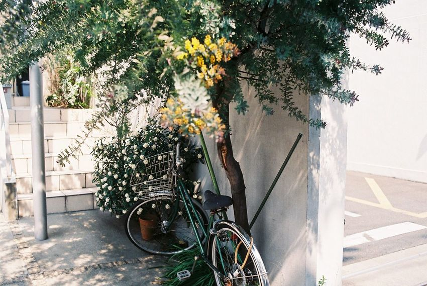 Photo Photography Photooftheday Film Film Photography Filmisnotdead Streetphotography Street Photography Bicycle Tree Plant Trees Plants Sunlight Street Life View EyeEm Best Shots EyeEm Best Edits EyeEmBestPics EyeEm