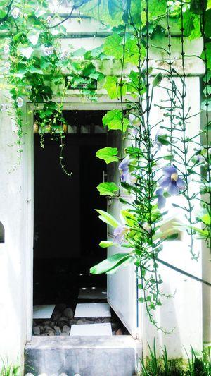 ❤❤? Taking Photos Enjoying Life My Room Popular Photos Popular Nature Hello World
