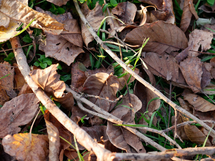 Plant Part Leaf Dry Plant Leaves Nature No People Land Autumn Close-up Field Day Vulnerability  Fragility High Angle View Change Beauty In Nature Falling Growth Outdoors Stick - Plant Part Dried