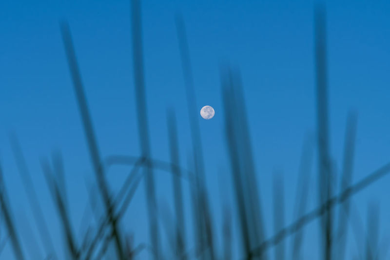 Low angle view of moon against blue sky at dusk