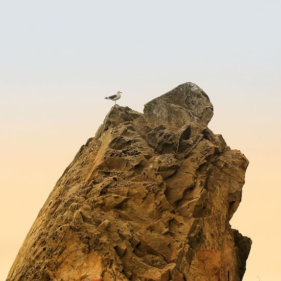 Low angle view of bird on rock against clear sky