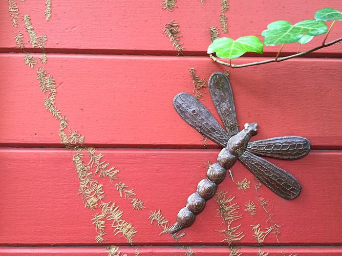 Red Wall Ivy Ivy Leaves Ivy Roots Metal Sculpture Dragonfly Hammered Metal Haitian Sculpture In My Garden Open Edit