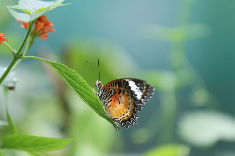 Colors Nature Beauty In Nature Butterfly Nice Outdoors Photo Photographer Photography