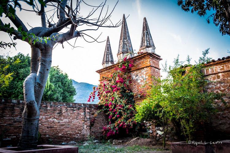 Ruinas de un antiguo templo en Tonaya, Jalisco. Ruins Flowers Lugares De México Lugares Magicos