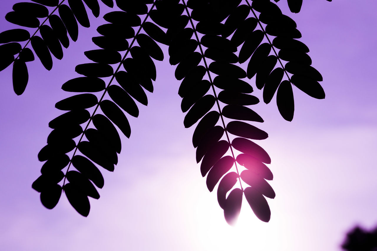 Close-Up Of Silhouette Leaves Against Sky