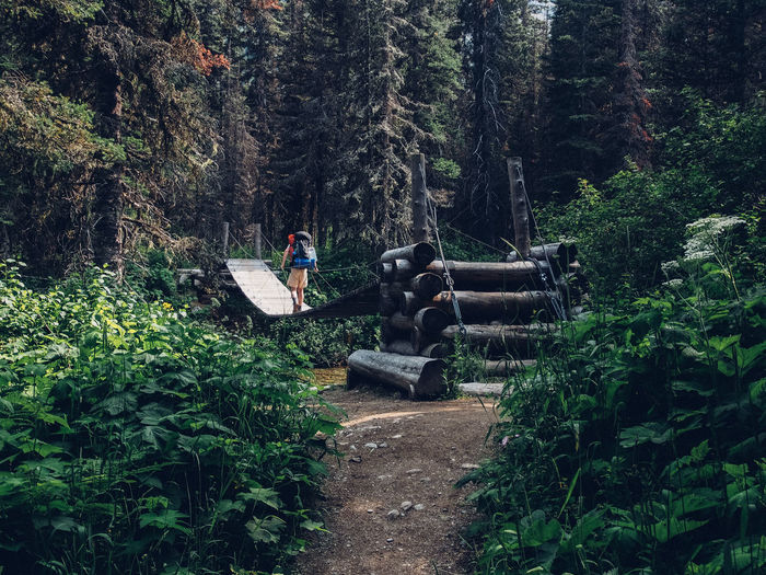 A hiker crossing a creek using a bridge in the backcountry of Glacier National Park Adventure Beauty In Nature Day Exploration Forest Glacier National Park Growth Hiker On Bridge Hiking Men Montana Nature Outdoors People Plant Real People Tree