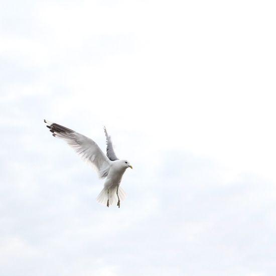 Seagull Sneek Canon760D EOS