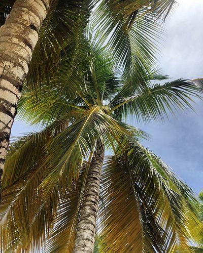 🌴 Dominican Republic Relaxing Relaxing Nature Beutiful