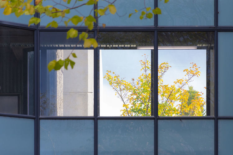 Close-up of yellow flowers on window of building