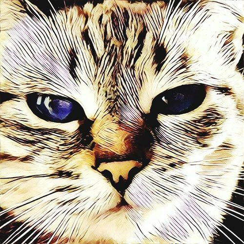 Domestic Cat Looking At Camera One Animal Portrait Animal Themes Feline No People Mammal Domestic Animals Pets Whisker Close-up Animal Eye Cat Backgrounds Indoors  Day The Painter Painting Art Artwork Art And Craft Art, Drawing, Creativity Drawing - Art Product Drawing Outdoors