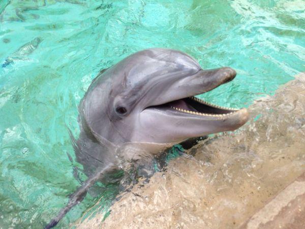 Dolphin Seaworld Seaworldorlando Showcase: February