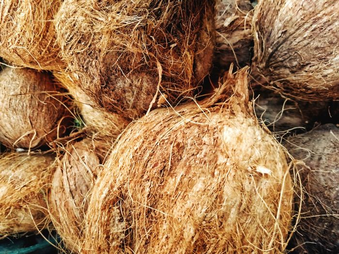 Coconuts-Botanic