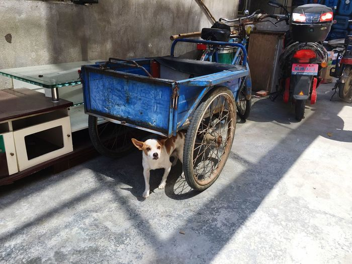 High angle view of dog standing under luggage cart parked by wall on road