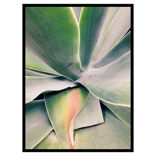 Plant form. Vscocam
