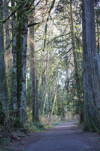 Moss & Lichen Pacific Northwest  Pacific Northwest Beauty Beauty In Nature Day Forest Moss Nature No People Outdoors Scenics Tranquil Scene Tranquility Tree Tree Trunk WoodLand