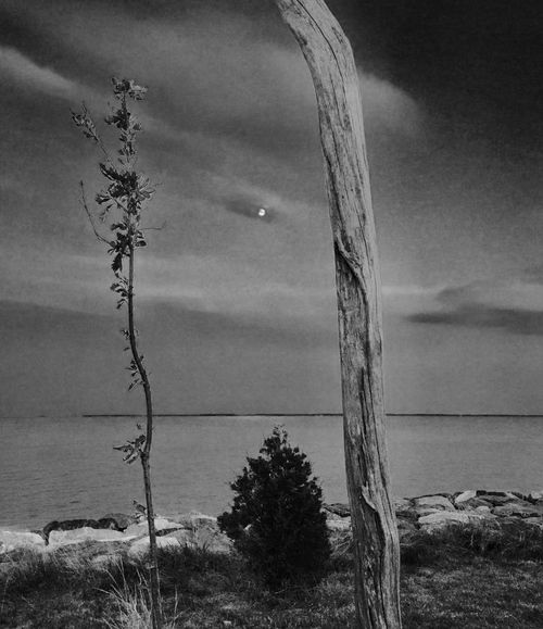 Moonrise (Tilghman ) Sea Horizon Over Water Water Scenics Tranquil Scene Moon Moonlight Growth Beauty In Nature Tranquility Nature Sky Remote Non-urban Scene Outdoors Tourism Seascape Shore Day Uncultivated Majestic Eastern Shore Of Maryland Monochrome Photography