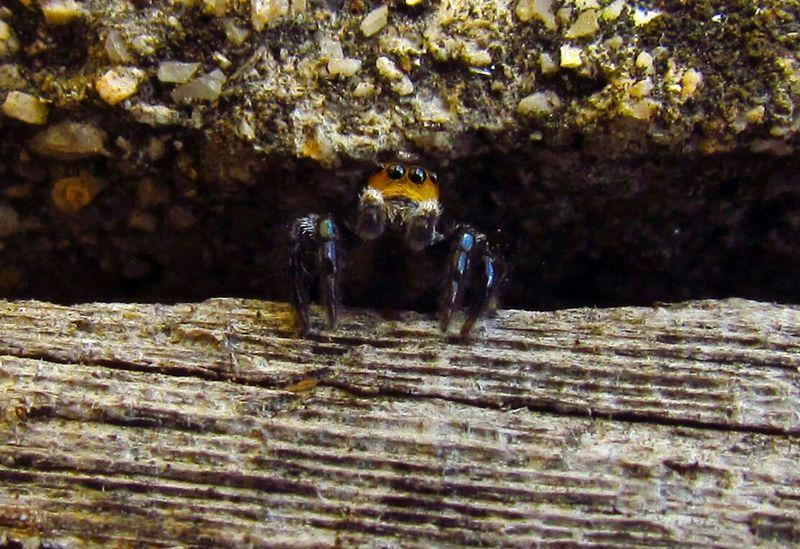 Spider Arachnid Aranha Spider Eyes Macro Photography Burrow Macro_collection Macroclique Nature_collection Macro