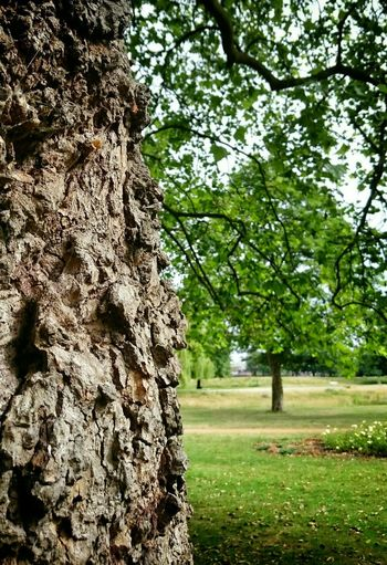 Knarly tree Hugging A Tree Nature , Spring, Beautiful Wandle Park Taking Photos Check This Out Cheese! Streetphotography