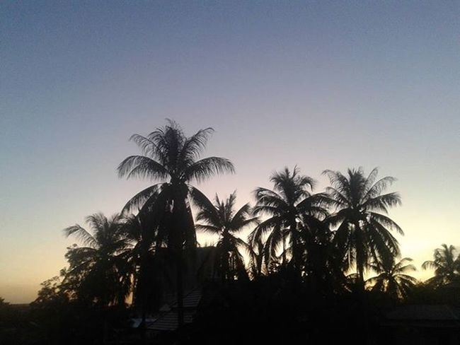 Sunset Sunrays Shadowsinthedark Shadow Silhouette Trees Palmtrees Coconuttrees Mekongsunset Myview Frommywindow Vientiane Laos Laospdr Southeastasia Weather Dusk Evening Lifeasiseeit Johnnelson Tranquil Solace