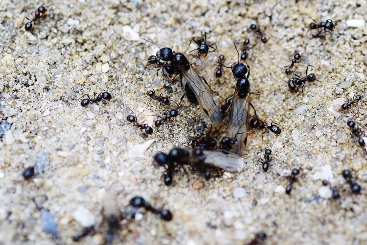 Ants Ants At Work Animals In The Wild Animal Themes Insect Day Ant Animal Wildlife Outdoors Beach Colony Large Group Of Animals No People Sand Nature Teamwork Close-up