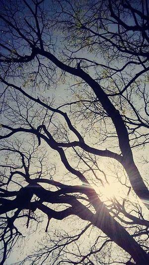 WorldUpsideDown wicked tree goes beautiful