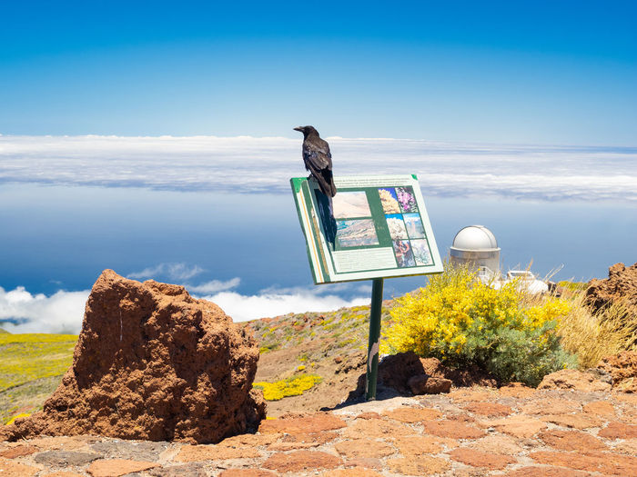 Crow in the Roque de los muchachos island La Palma, near a telescope Sky Rock Rock - Object Nature Scenics - Nature Cloud - Sky Beauty In Nature Day No People Land Non-urban Scene Remote Rock Formation Tranquil Scene Tranquility Landscape Sea Roque De Los Muchachos Crow Telescope La Palma Island Observatory Volcano Canarias Island
