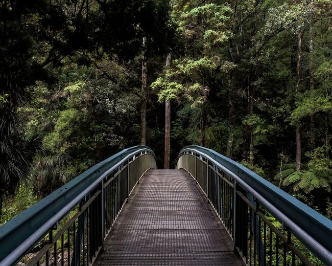 This is a photo of a bridge in a forest