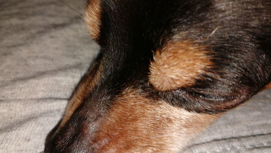 Pets Dog Domestic Cat German Shepherd Feline Portrait Close-up Animal Body Part
