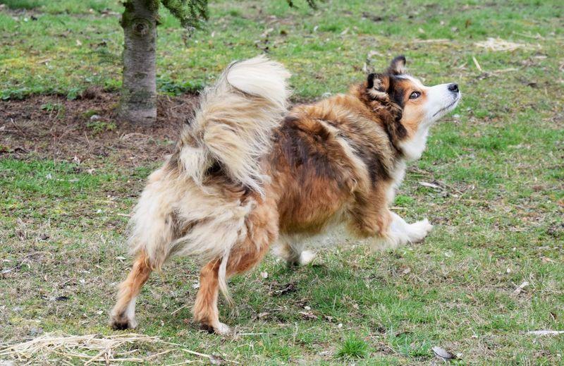 Mammal Animal Animal Themes Domestic Pets Domestic Animals Land Group Of Animals Vertebrate Field Plant Dog Nature Grass Day No People Full Length Alertness