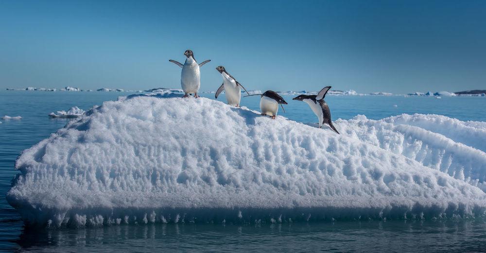 Birds in sea against clear sky