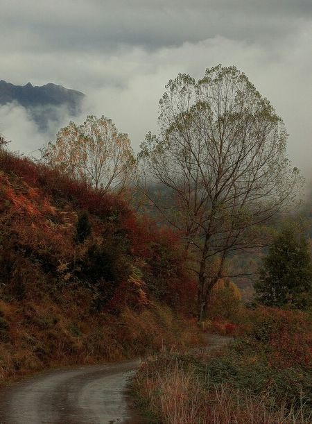 """Autumn in Aragón"" Autumn Autumn Colors Autumn🍁🍁🍁 Autumn Collection Olympus倶楽部 Olympus E500 Pyrenees Pirineos PirineosOccidentales Landscape Photography Landscape Aragon, Spain Photooftheday Nature Collection Paisajes"