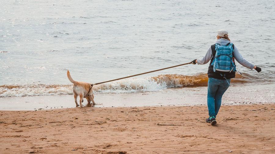 A girl and a labrador retriever run along a sandy beach to the water in autumn. walking with a dog