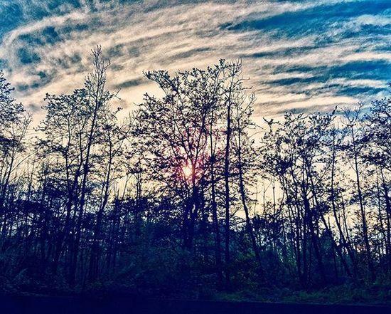 Tree Sun Cloads Talesh
