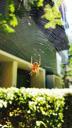 Spider Spider