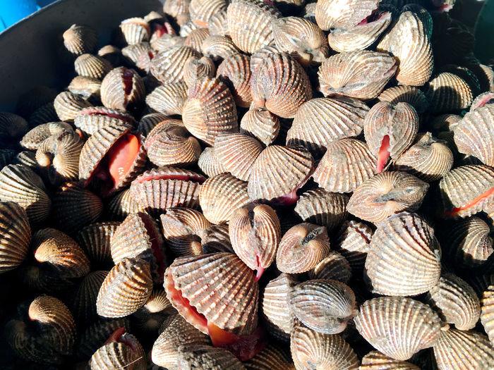 Fresh scallops piling