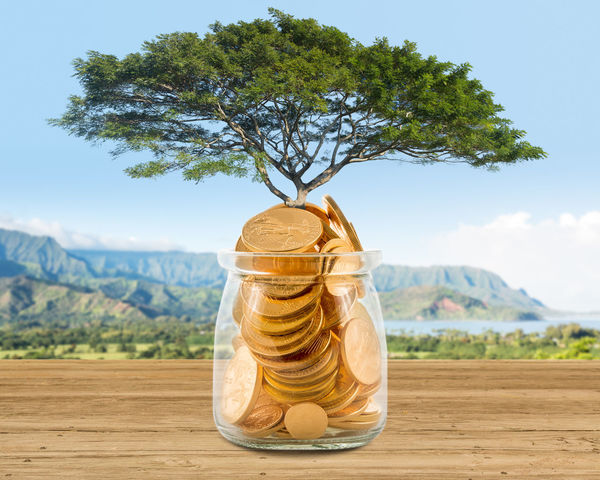Illustration of investment planning and saving for retirement with golden coins in savings jar with large tree growing from it Gold Growth Planning Tree Cash Fortune Investing Investment Investment Planning Investments Jar Money No People Portfolio Retirement Save Savings Shelf Wealth Wealthy