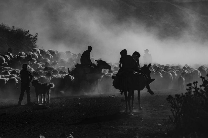 Sürü The Photojournalist - 2018 EyeEm Awards The Still Life Photographer - 2018 EyeEm Awards HUAWEI Photo Award: After Dark