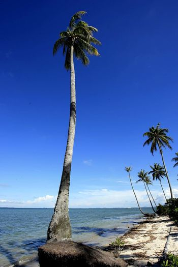 Palm Trees On Shore Against Blue Sky