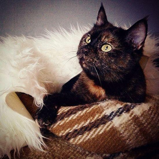 АП. __________________________________ My Cat Animal Podolsk Russia моя кошка животные Подольск Россия __________________________________