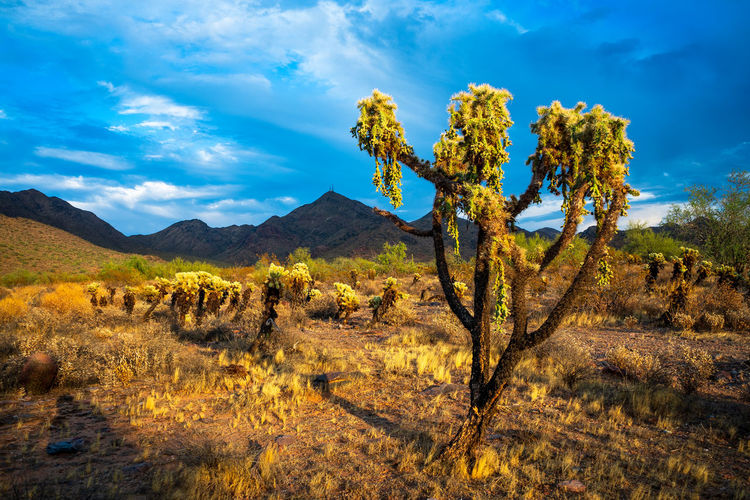 View of cactus growing on field against sky