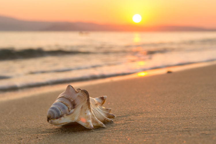 Conch shell on the beach at sunset Sunset Sky Beach Sand Island Sun Shell Water Sea Nature Animal Outdoors Summer Idyllic Vacations Travel Summetime Sunlight Reflection Mollusk Whelk Conch Atmospheric Mood Seashore Wave