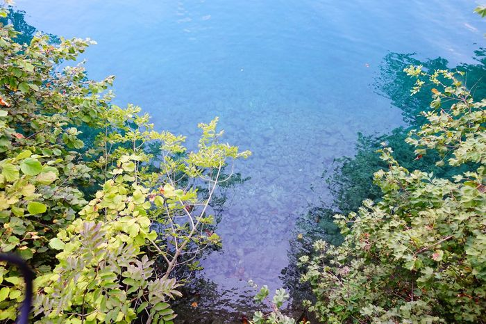 Bled, Slovenia Water Sea High Angle View Blue Nature Growth Beauty In Nature Scenics Tranquility Plant Tranquil Scene Idyllic Flower Seascape Day Outdoors Green Color Non-urban Scene Vibrant Color Green