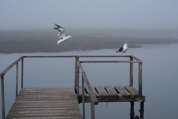 Seagull Bird Animal Wildlife Animals In The Wild Animal Animal Themes Vertebrate Water Seagull Sea Wood - Material One Animal Sky Nature Railing Perching Day Sea Bird No People Outdoors