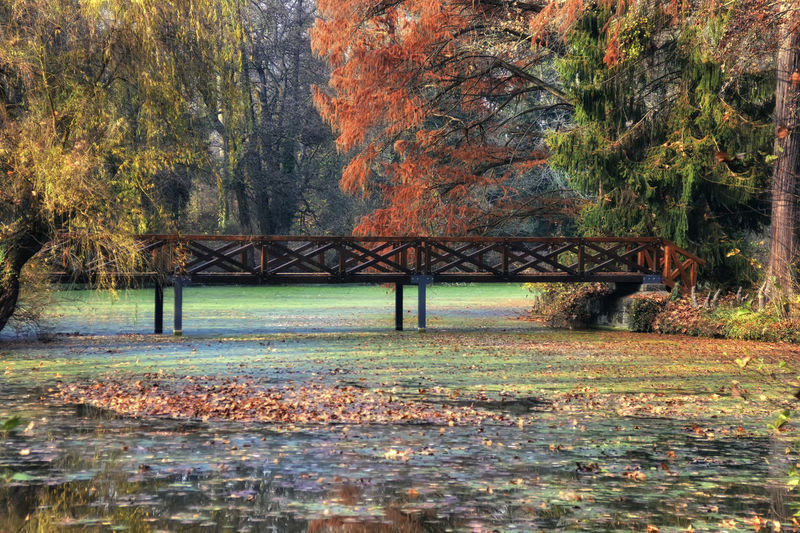 Tree Water Autumn Nature Bridge No People Change Tranquility Connection Beauty In Nature Tranquil Scene Forest Waterfront Architecture Built Structure Scenics - Nature Fall Fall Beauty Autumn colors Autumn Leaves Orange Color