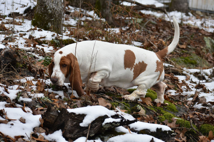 View of dog on field during winter